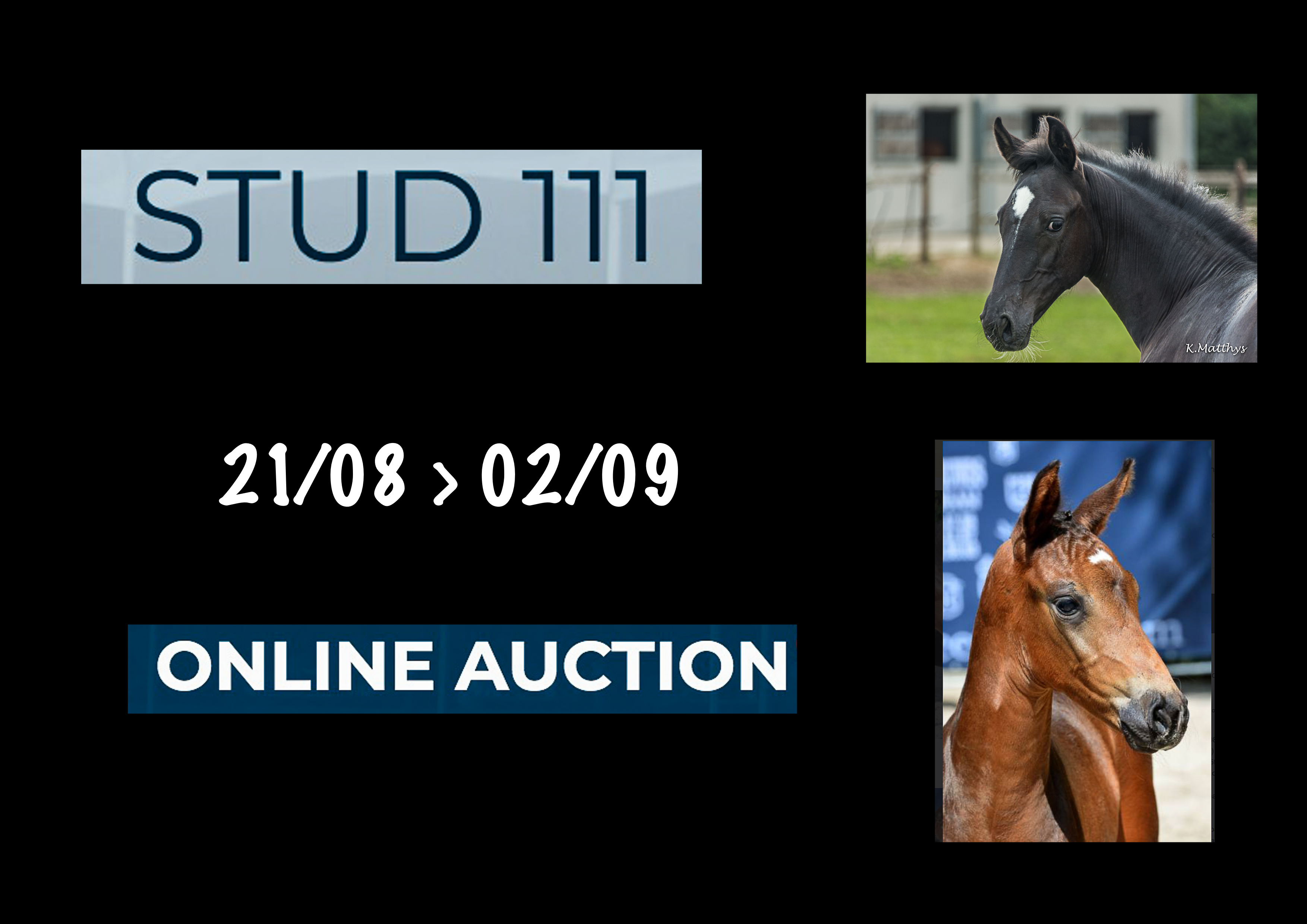 Kannan's Diamond v/h Gouden Bit Z & Undercover v/h Gouden Bit Z take part in the online auction of  STUD III  !